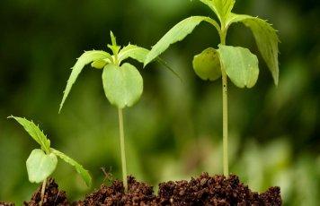 Натуральные регуляторы роста - безопасные БАДы для растений
