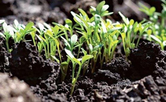 Что влияет на всхожесть семян?