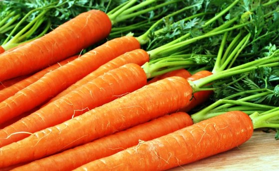 Как вырастить богатый урожай моркови?