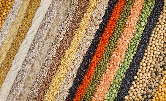 Семена со специфической обработкой: разновидности и преимущества