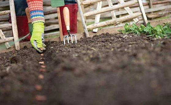 Сеем овощи под зиму: стоит ли рисковать?
