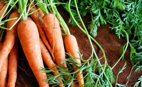 Посадка моркови поздней осенью