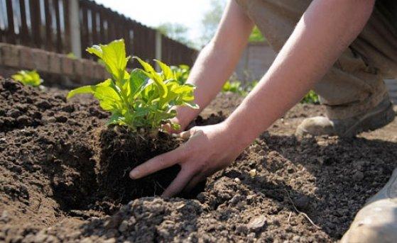 Популярные ошибки при посадке растений